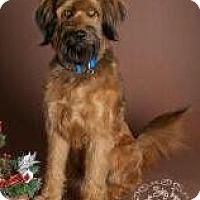 Adopt A Pet :: Buck - Phoenix, AZ