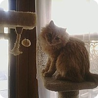 Adopt A Pet :: Quigly - Lenexa, KS