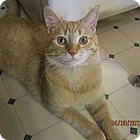 Adopt A Pet :: Zappa (awesome) - Sterling Hgts, MI