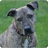 Adopt A Pet :: SWEET CAROLINE - Phoenix, AZ