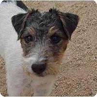 Adopt A Pet :: COLT .45 - Scottsdale, AZ