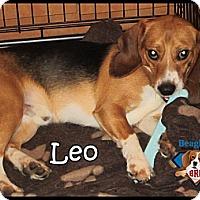 Adopt A Pet :: Leo - Yardley, PA