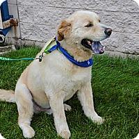 Adopt A Pet :: Teddy - Piqua, OH