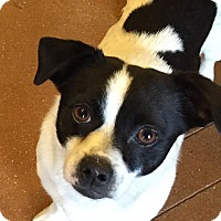 Adopt A Pet :: Cooper - San Antonio, TX