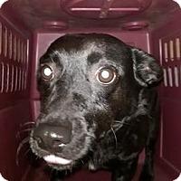 Adopt A Pet :: Betty - Jarrell, TX
