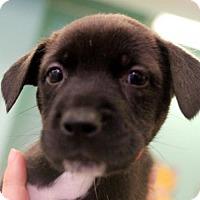Adopt A Pet :: Mindy - Atlanta, GA