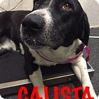 Adopt A Pet :: Calista - Waycross, GA