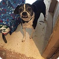 Adopt A Pet :: Spud - Weatherford, TX