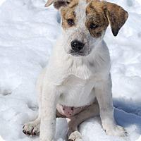 Adopt A Pet :: Emily - Parker, CO