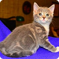 Adopt A Pet :: Emma - Buford, GA