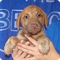 Adopt A Pet :: Radar - Oviedo, FL