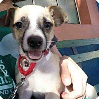 Adopt A Pet :: KABOODLE - San Francisco, CA