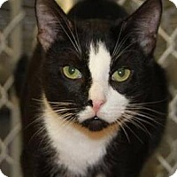 Adopt A Pet :: Chester - Freeport, NY