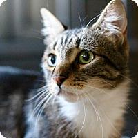 Adopt A Pet :: Tito - Los Angeles, CA