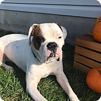 Adopt A Pet :: Graham - New Oxford, PA