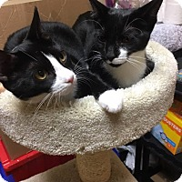 Adopt A Pet :: Sylvester - Georgetown, DE