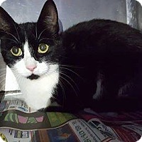 Adopt A Pet :: Daria - THORNHILL, ON