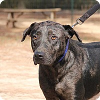 Adopt A Pet :: Chief - Ruston, LA