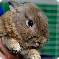 Adopt A Pet :: Taco - Pottsville, PA