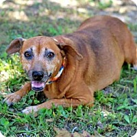 Adopt A Pet :: RED LADY - richmond, VA