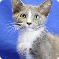 Adopt A Pet :: Grayson - Winston-Salem, NC