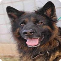 Adopt A Pet :: SAMSON - Waynesville, NC