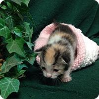 Adopt A Pet :: Tea Cup - Tehachapi, CA