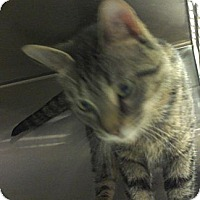 Adopt A Pet :: iris - Muskegon, MI