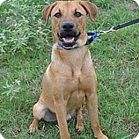 Adopt A Pet :: *Buzz - PENDING - Westport, CT