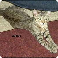 Adopt A Pet :: Noah - Jacksonville, FL