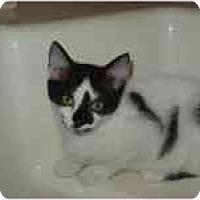 Adopt A Pet :: Cherrie & Chelsea - Arlington, VA
