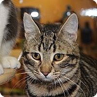 Adopt A Pet :: Duncan - Santa Monica, CA