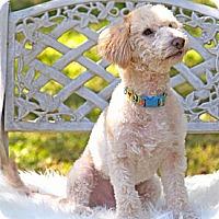 Adopt A Pet :: Timmy - San Antonio, TX