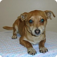 Adopt A Pet :: Ricky - Gary, IN