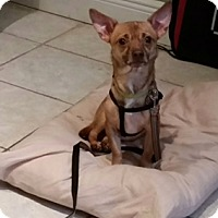 Adopt A Pet :: Milo - Davie, FL
