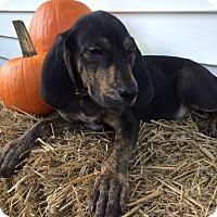 Adopt A Pet :: Green Boy - Zanesville, OH