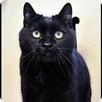 Adopt A Pet :: MRS. JENNY - Alamogordo, NM