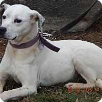 Adopt A Pet :: Daisy #2(55 lb) URGENT! - Sussex, NJ