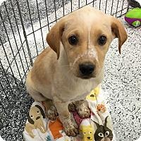 Adopt A Pet :: Parker - Tucson, AZ