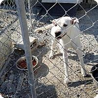 Adopt A Pet :: Leigha - Shelbyville, TN