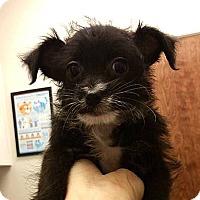 Adopt A Pet :: Beauty - Tijeras, NM