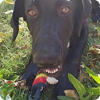 Adopt A Pet :: Thunder - Canutillo, TX