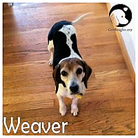 Adopt A Pet :: Weaver - Pittsburgh, PA