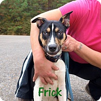 Terrier (Unknown Type, Medium) Mix Dog for adoption in Oakdale, Louisiana - Frick