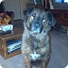 Adopt A Pet :: Teddie (COURTESY POST)