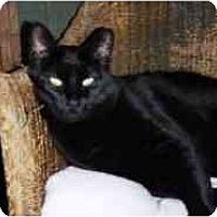Adopt A Pet :: Belle - Pasadena, CA