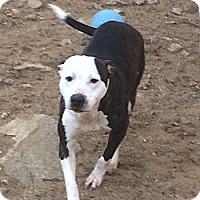 Adopt A Pet :: Psych (courtesy post) - Woodbridge, CT