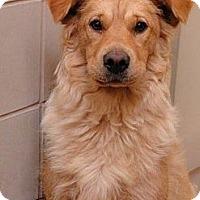 Adopt A Pet :: Puddin - New Boston, NH
