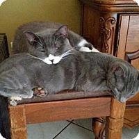 Adopt A Pet :: Kermie - Orlando-Kissimmee, FL