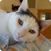 Adopt A Pet :: Norma Jean - Mountain Center, CA